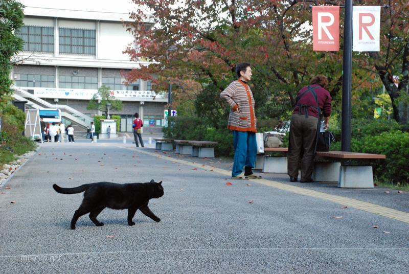 20081101_kyoto1_800_c