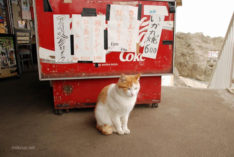 20090309_enoshima1_800_c