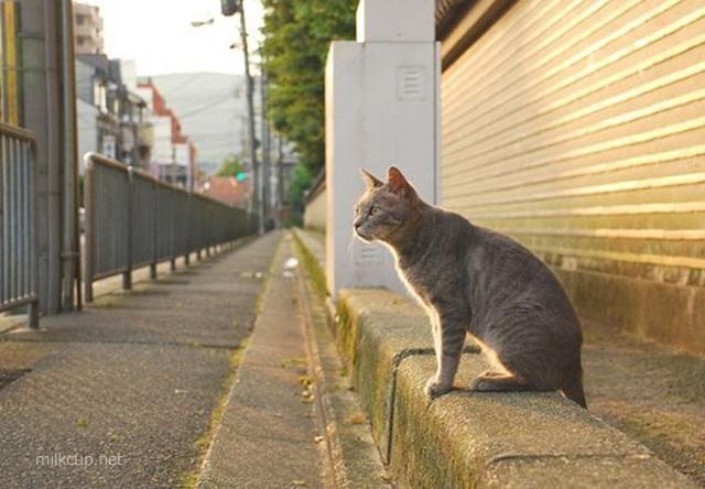 kyoto2_640_c